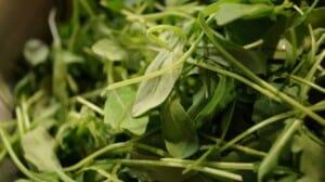 How to grow salad greens - Arugula