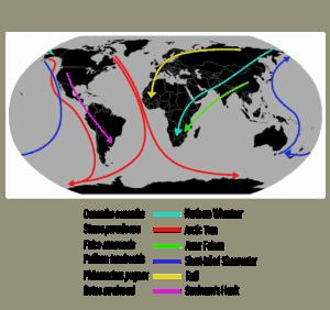 Bird Migration - Migration routes of a few selected long-distance migratory birds (Source: author L. Shyamal)