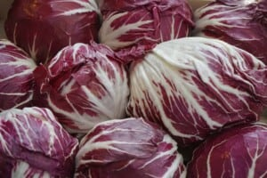 How to grow salad greens - Radicchio