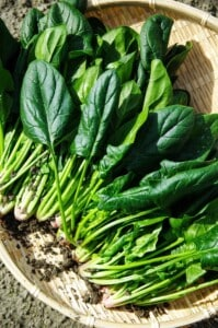 How to grow salad greens - Spinach