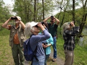Go Birding - Where's the bird? I can't find it! (Photo by Erich Boenzli)