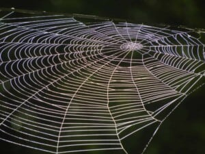 Garden Spiders - Orb-weaver web (Photo Erich Boenzli)