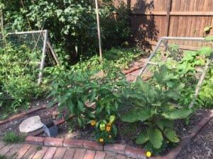 Vegetable trellis - Lots of veggies coming soon! (Photo by Erich Boenzli)