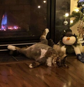 Chestnuts Roasting on an Open Fire - Just roasting some nuts