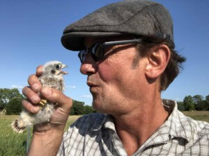 About Erich - American Kestrel baby (Falco sparverius) about to get banded