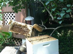 About Erich - Backyard beekeeping at home