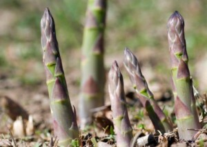 Perennial Vegetables (Photo courtesy of gardeningknowhow.com)