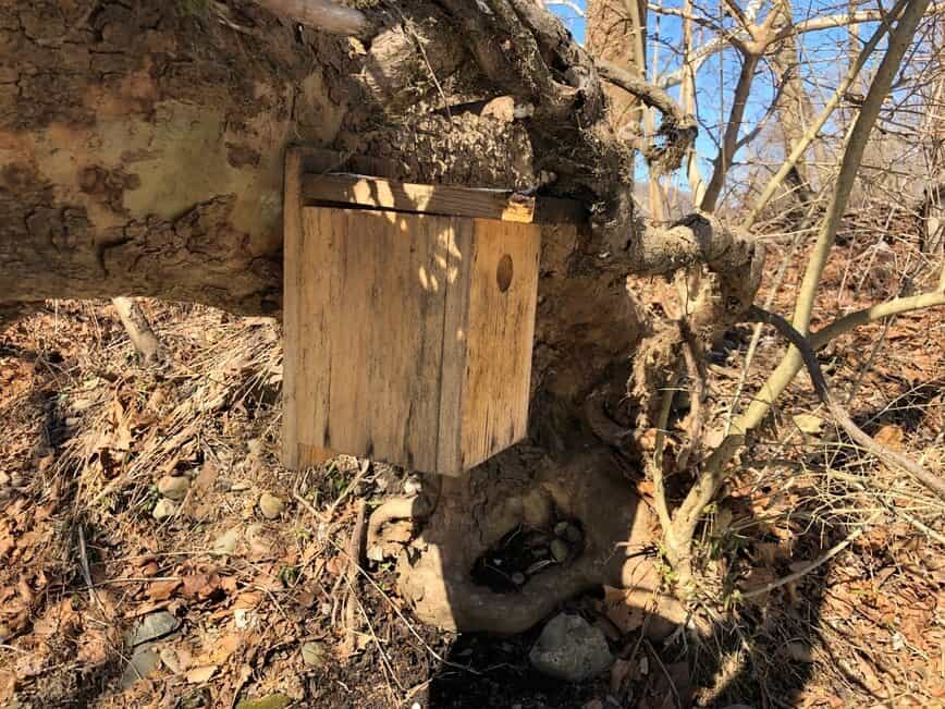 Nesting Box - Prothonotary Warbler (Protonotaria citrea) nesting box (Photo by Erich Boenzli)