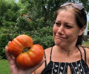 Garden Vegetables - That's one huge tomato (Photo by Erich Boenzli)
