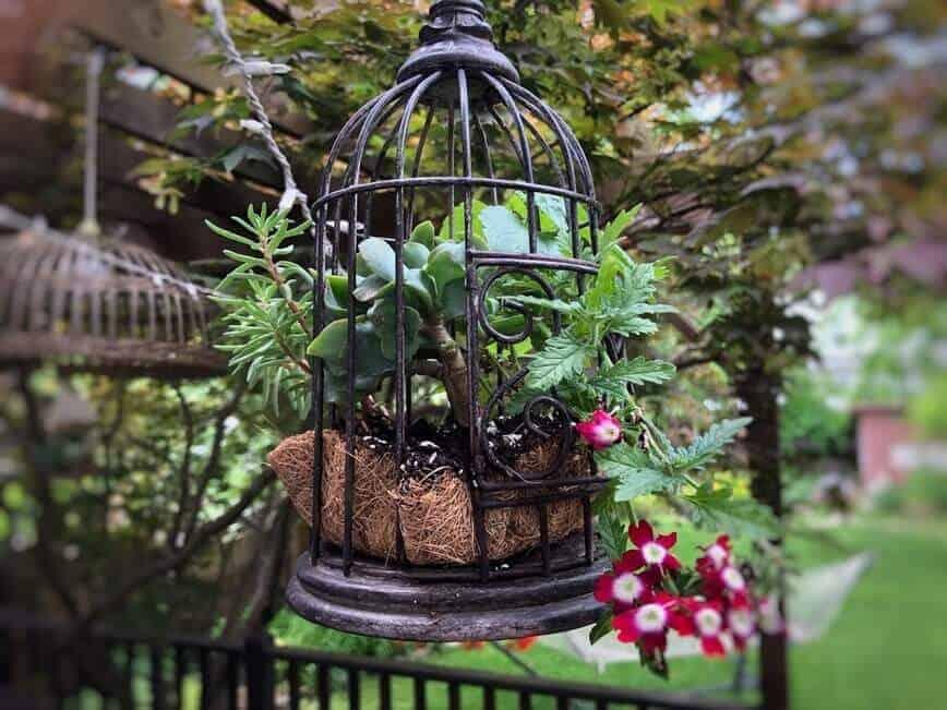 Birdcage Planter (Photo by Erich Boenzli)