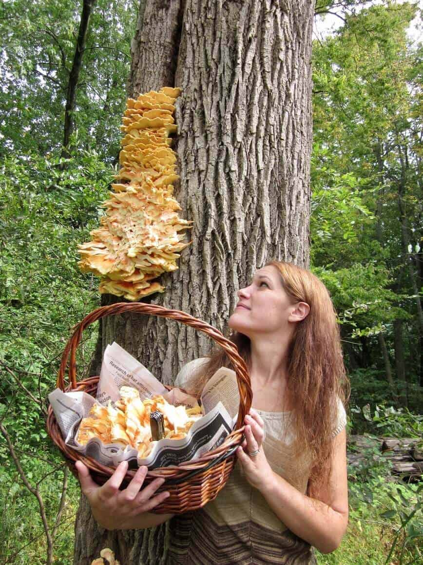 Chicken of the woods - A nice find a few years back (Photo by Erich Boenzli)