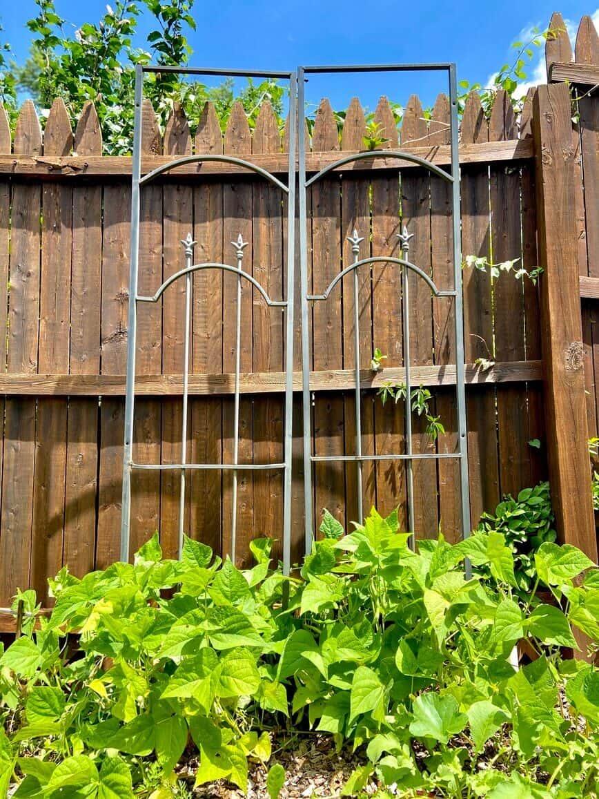 Garden Decor - garden trellis (Photo by Viana Boenzli)
