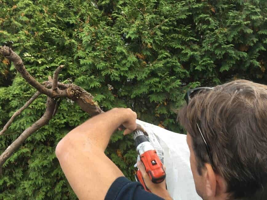 Big Guy Halloween decoration - Attaching hands to arms using wood screws (Photo by Viana Boenzli)
