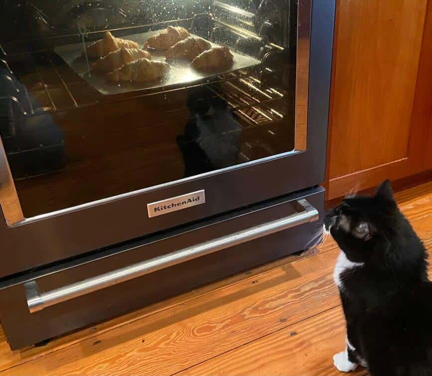 How to Make Croissants (and pain au chocolat!) - Monkey helped me keep a close eye on the croissants baking (Photo by Viana Boenzli)