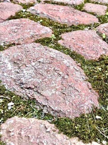 Faux Stone Path (Photo by Viana Boenzli)
