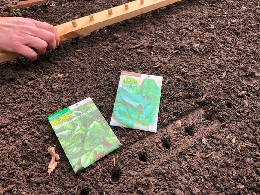 How to grow salad greens - Placing holes in the soil with Erich's DIY garden tool (Photo by Viana Boenzli)