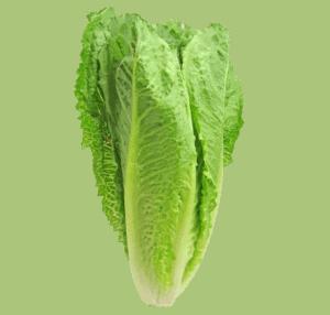 How to grow salad greens - Romaine