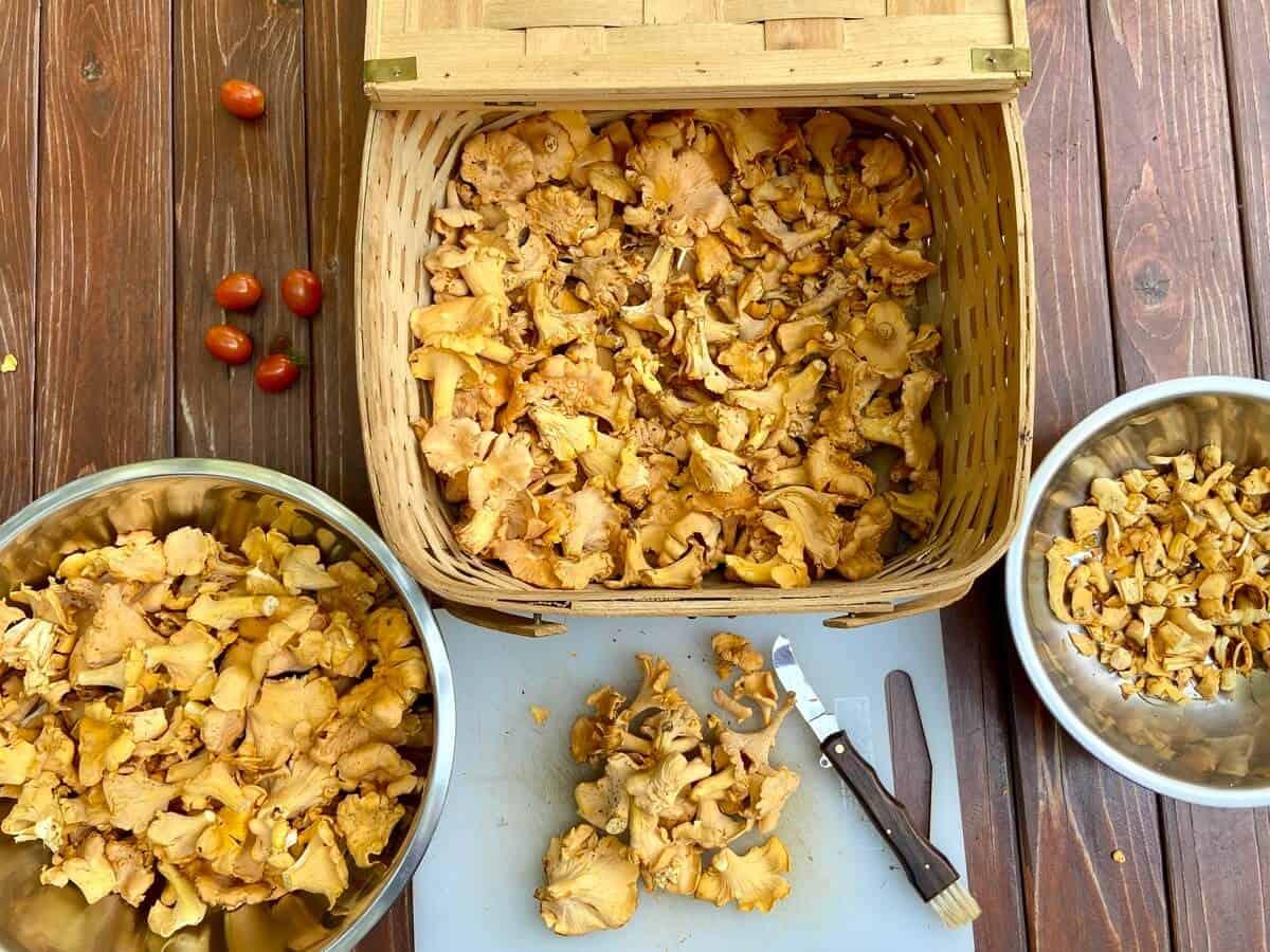 Mushroom Jerky Recipe (Photo by Erich Boenzli)